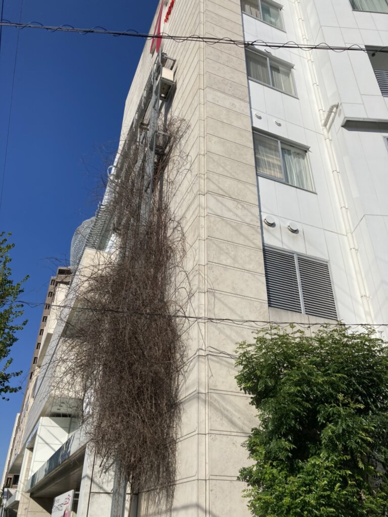 守山いつき病院樹木撤去工事